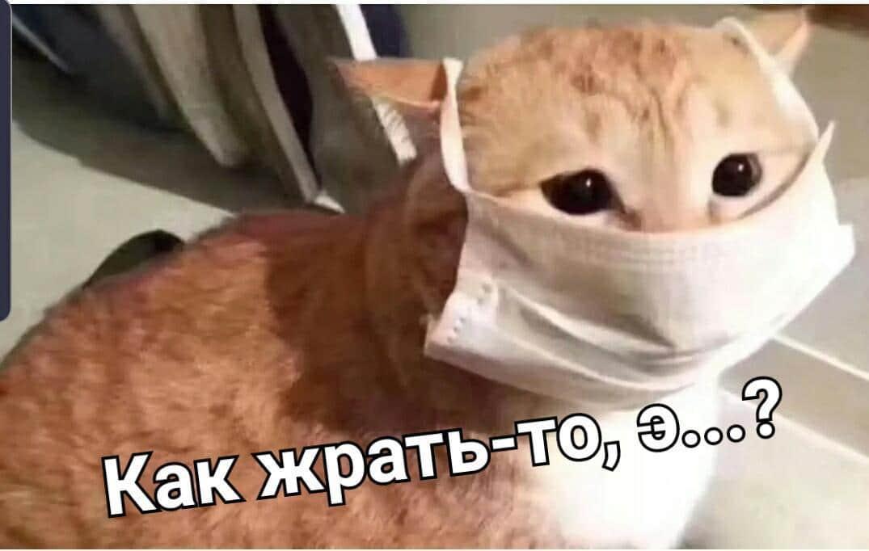 как жрать то э кот спрашивает в маске