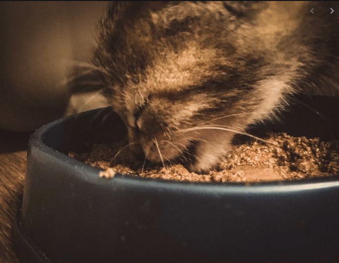 Как кормить кота шебой