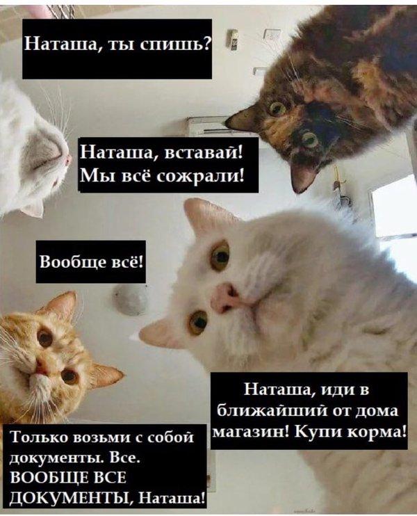 коты просят наташу сходить за кормом