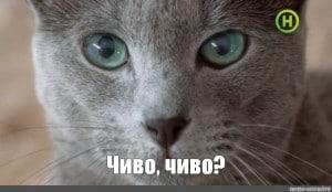 "Мем: Кошка шеба спрашивает ""чиво, чиво?"""