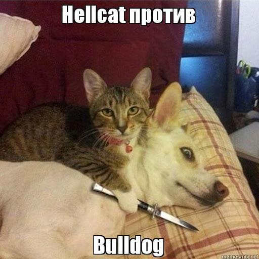 Кошка против собаки - мем