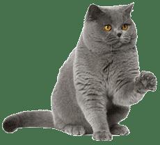 Кошка по кличке Шеба